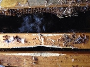 February Hive Inspection