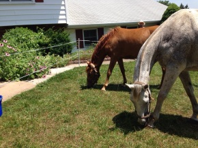 Horses on Small Acreage
